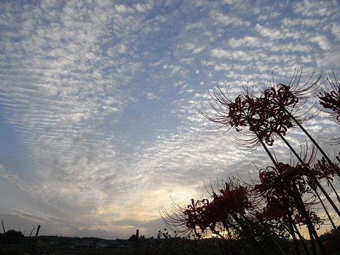 Sky_091003_011