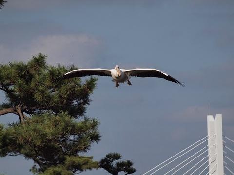 Pelican_091123_022