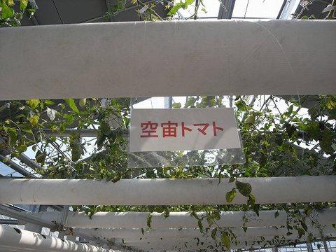 Tomato_100821_011