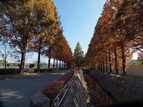 Tree_101120_011