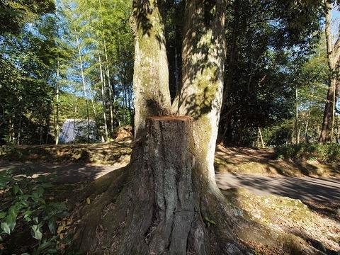 Tree_101205_011