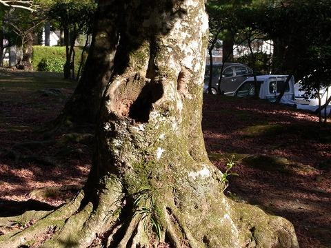 Tree_101205_013