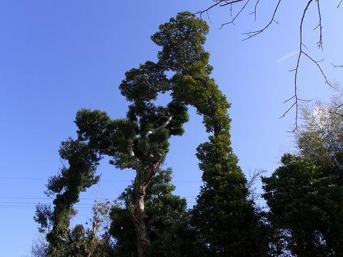 Tree_110102_011