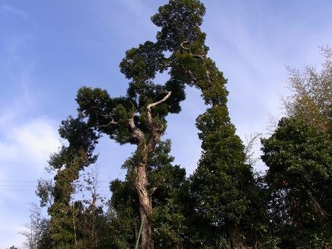Tree_110102_012