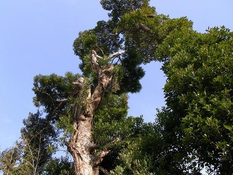 Tree_110102_013
