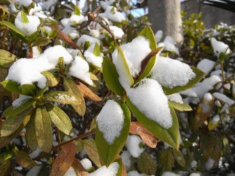 Snow_110116_013