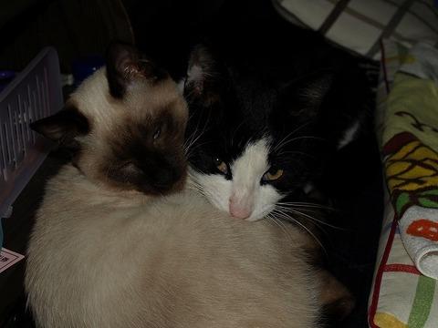 Cat_110205_011