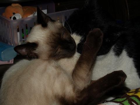 Cat_110205_012