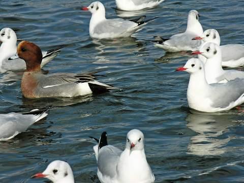 bird_060104_021